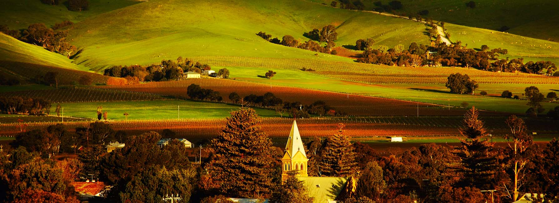 Eat Local SA in the Barossa